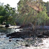 ITW (23) : Mangrove @ Teluk Balau
