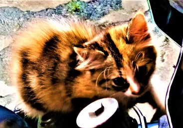 Furball the kitten. Loves climbing all over and one day ended up dreaming of riding my eldest's bike. (photo credit : Shah Said ; @ all rights reserved)