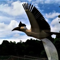The Hornbill of Damai Central