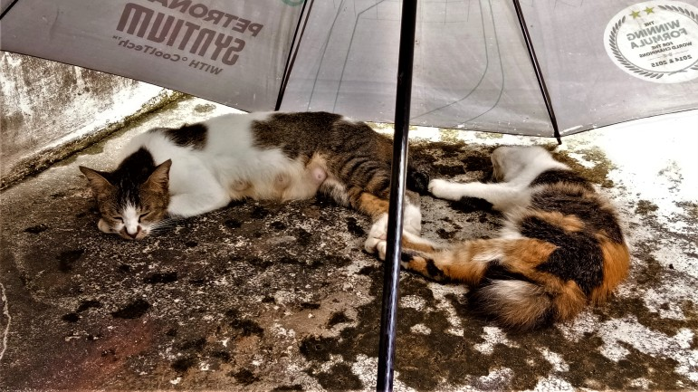 Po and her niece, Furball, both having a lie-in under the 'cabana'. (photo credit : Shah Said ; @ all rights reserved)