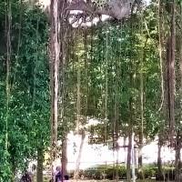 Tanjung Emas @ Royal Muar (2)