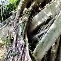 Tanjung Emas @ Royal Muar (3)