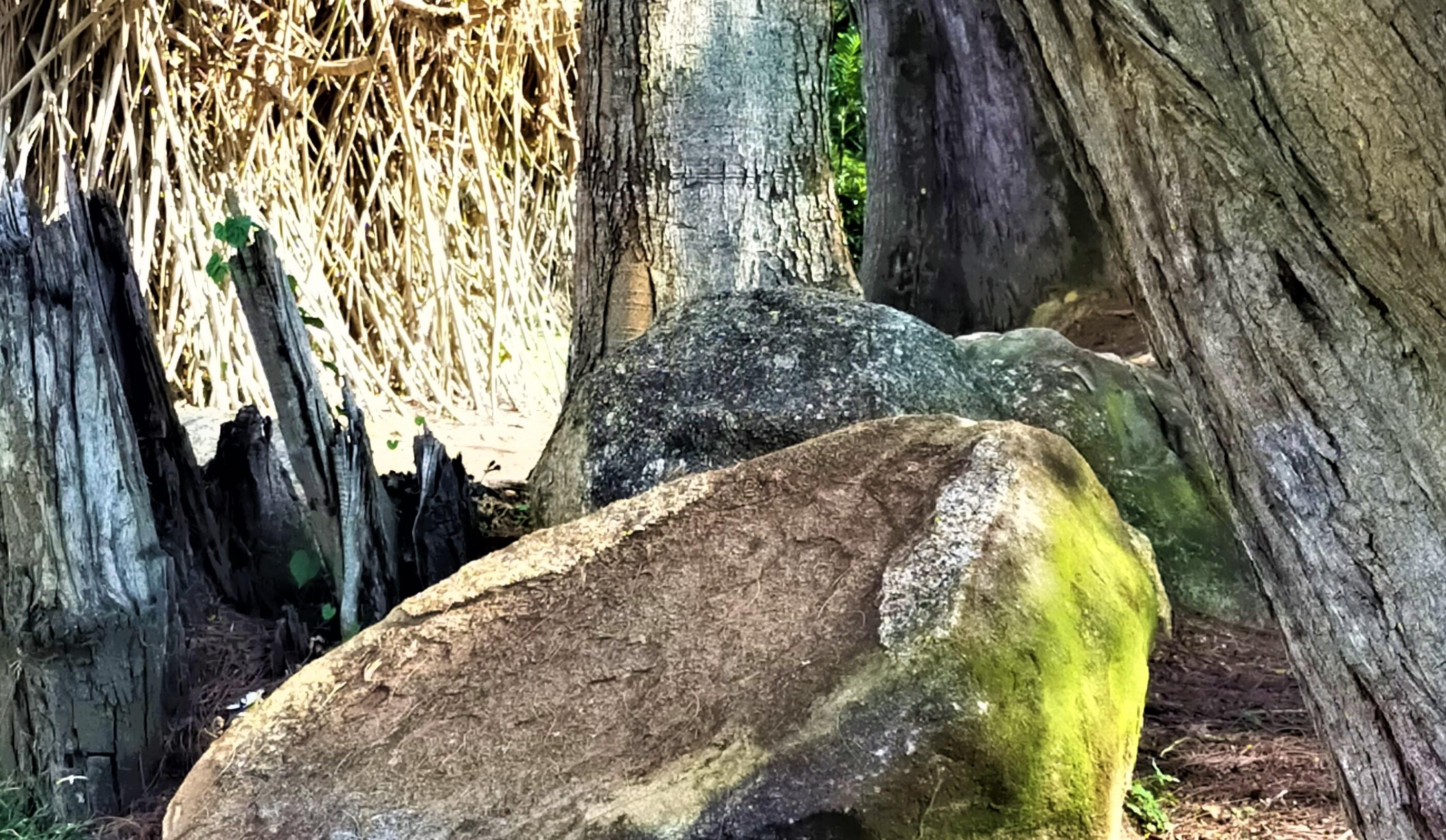 Tanjung Emas @ Royal Muar (7)